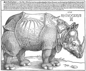 300px-Dürer_rhino